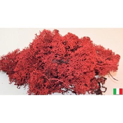 LICHENE rosso - 50GR