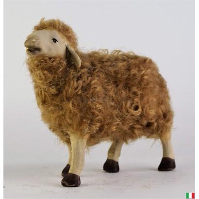 Pecora di lana in...