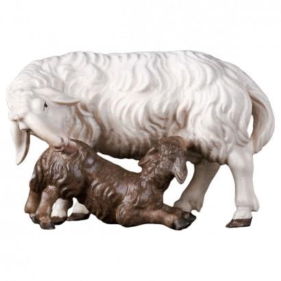 Pecora con agnello...