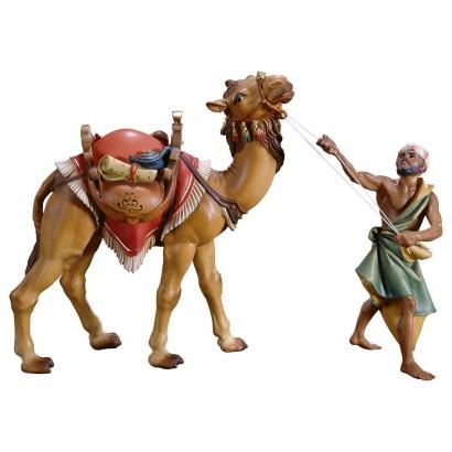 Gruppo del cammello in piedi