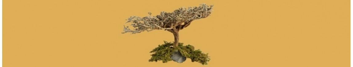 Vendita vegetazione naturale faidate per il presepe - PresepeePresepi
