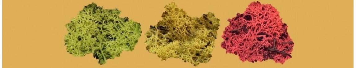 Vendita Lichene naturale per Presepe diversi colori - PresepeePresepi