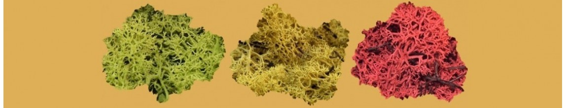Lichene